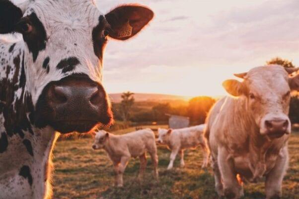 HACCP в молочной промышленности