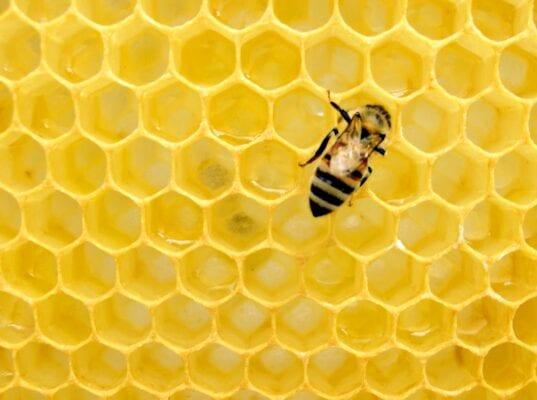 Определение рисков при внедрении НАССР на предприятиях по производству меда