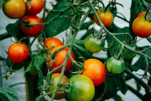 Внедрение HACCP на предприятиях по выращиванию овощей и фруктов
